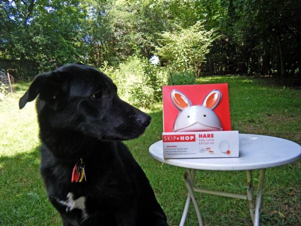 Dog-Hare